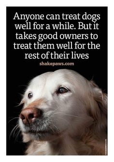 That's why I have a houseful of geriatric dogs. We all deserve love for our whole lives I Love Dogs, Puppy Love, Cute Dogs, Animals And Pets, Cute Animals, Dog Rules, Old Dogs, Animal Quotes, Pet Quotes