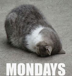 Why did this Tuesday feel like second Monday??