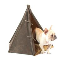Stay on trend with this adorable dog teepee. | 28 Ingenious Things For Your Dog You Had No Idea You Needed