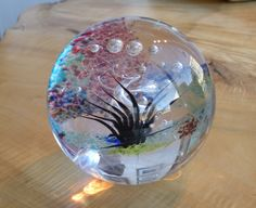 Round Glass Seascape Paper Weight by Jonathan Winfisky. $150.00, via Etsy.