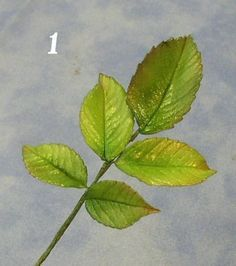 how to make a fondant rose leaf