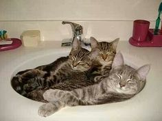 Sink party. ... for cats only