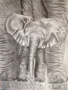 Baby Elefant Elephant, Portraits, Baby, Animals, Draw, Kunst, Photo Illustration, Animales, Animaux