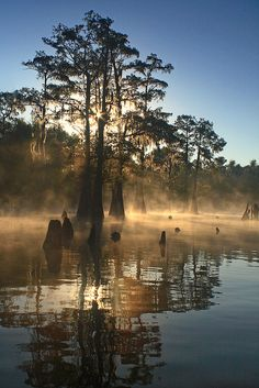 Bayou Benoit Sunrise, .- Bayou Benoit is a gut located just 12.5 miles from Saint Martinville, in St. Martin Parish, in the state of Louisiana,  near Dauterive Landing, LA. Fishermen will find a variety of fish including yellow bass, bluegill, sucker, white bass, crappie, channel catfish, sunfish and yellow perch here.