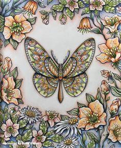 Hanna Kalzon/ Summer Nights/ colouring book/ Prisma Pencils/ Polychromos Pencils/ Ness Butler/