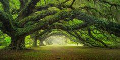 Nice » Avenue Of Oaks At Dixie Plantation In South Carolina!