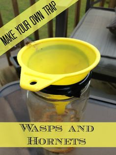 The Serene Swede: DIY Hornet and Wasp trap. She put taco meat in the bottom of the mason jar, funnel inverted and taped around it. Supposed to attract wasps and hornets but not bees Wasp Trap Bait, Wasp Traps, Bug Trap, Fly Traps, Wasp Deterrent, Wasp Repellent, Homemade Wasp Trap, Hornet Trap, Getting Rid Of Bees