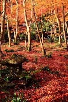 Autumn garden at Giou-ji temple, Kyoto, Japan