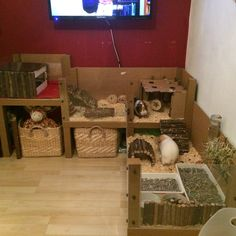Home made Guinea pig cage. Tables from Argos, linoleum base and Perspex sides.