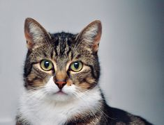 Keeping all our fur buddies calm during quarantine. Emisha hemp CBD catnip is a fun way for cats to enjoy the experience and benefits of CBD. Made specifically for cats, our catnip is a great way to introduce CBD in a positive and familiar way. #CBDCatnip #CBDforCats #CatHealth #CatCBD www.EmishaWellness.com Funny Cat Compilation, Funny Cat Memes, Funny Cat Videos, Funny Cat Pictures, Funny Cats, Cat Selfie, Cute Kittens, White Tabby Cat, Homeless Dogs