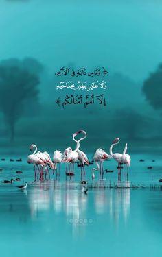 Quran Quotes Love, Quran Quotes Inspirational, Beautiful Islamic Quotes, Islam Beliefs, Islam Religion, Islam Quran, Quran Arabic, Islamic Images, Islamic Pictures