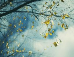 Tree and leaves (by Wynona Grey)