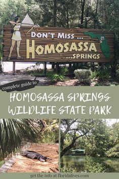 Guide to Homosassa Springs Wildlife State Park – Florida Lives Clearwater Florida, Sarasota Florida, Old Florida, Central Florida, Florida Beaches, Florida Springs, Orlando Florida, South Florida, Visit Florida