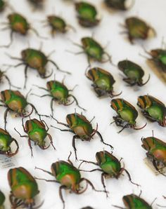 Beetles from our insect collections at National Museums Scotland