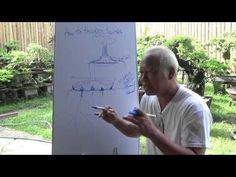 Bonsai Tutorials for Beginners: How to Thicken Trunks - YouTube