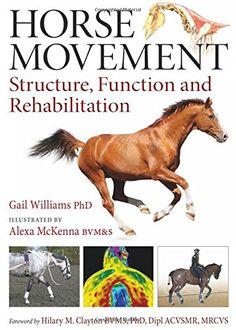 Horse Movement: Structure, Function and Rehabilitation by Gail Williams http://www.amazon.com/dp/1908809116/ref=cm_sw_r_pi_dp_EY-swb06TECM8
