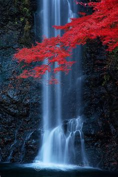 minoo waterfall, just outside osaka                                                                                                                                                                                 More
