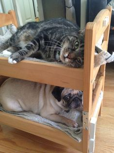 Can a dog and a cat be bunk bed mates? Seems so! - IKEA Hackers - OMG! The cutest!