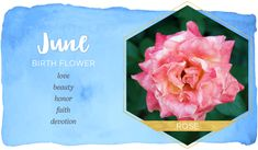 June Birth Flower June Birth Flower, June Flower, Birth Flowers, Birthday Month Flowers, Rose Meaning, Birth Flower Tattoos, Tattoo Flowers, List Of Flowers, Flower Meanings