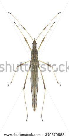 Hemiptera Fotos, imagens e fotografias Stock | Shutterstock