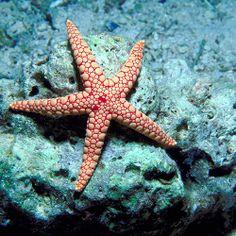 I got Starfish! What Beach Animal Are You?