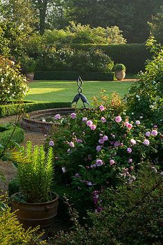 Pink roses in a lovely garden . . .