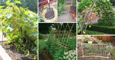 Diy Vegetable Garden Trellis: 19 Successful Ways To Building DIY Trellis For Veggies And Tomato Trellis, Diy Trellis, Garden Trellis, Sloped Yard, Garden Boxes, Garden Spaces, Garden Projects, Gardening Tips, Kitchen Gardening
