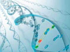 Penjelasan Bioteknologi Dengan Teknologi Plasmid - http://www.gurupendidikan.com/penjelasan-bioteknologi-dengan-teknologi-plasmid/