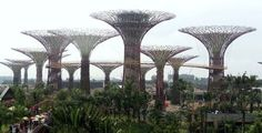 Kunstmatige 'bomen' in Singapore