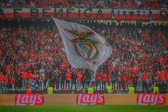 Benfica em HDR (@Benfica_HDR) | Twitter