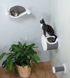 I love this idea instead of a regular cat tree. Wall Mounted Cat Lounging Set #ad #cats #cat