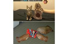 Giant Isopods: This isn't from a science fiction movie. These giant isopods, although technically a crustacean, are still terrifying. They live in the oceans… but that doesn't mean you're safe. Giant Isopod, Scary Bugs, Kill It With Fire, Tortoises, Animal Kingdom, Weird, Lion Sculpture, Pets, Creepy Things