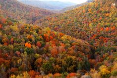 Fall Creek Falls State Park   Tennessee (by Virginia Bailey...
