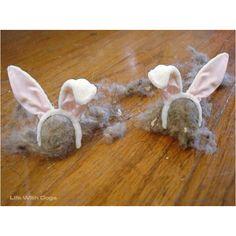 Dust bunnies or hare balls?