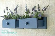 from drawer to wall planter....cool!
