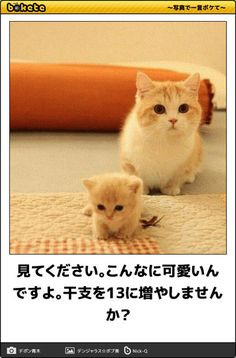 画像 Animals And Pets, Baby Animals, Funny Animals, Cute Animals, Tiny Cats, Service Dogs, Mom And Baby, Kittens, Funny Pictures