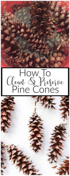 Collecting pine cones from nature can be dirty, sticky and filled with bugs. Learn how to clean and preserve pine cones so you can use them for years!