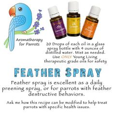 YL feather spray for soothing dry skin & help curb feather picking/plucking. Young Living Baby, Parakeet Toys, Parrot Feather, Are Essential Oils Safe, African Grey Parrot, Parrot Toys, Glass Spray Bottle, Secret Life Of Pets, Conure