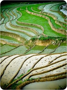 Sapa rice Winding Road, Terraces, Mother Earth, Southeast Asia, Garden Inspiration, Documentary, Roads, Paths, Cool Pictures