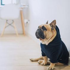 The major breeds of bulldogs are English bulldog, American bulldog, and French bulldog. The bulldog has a broad shoulder which matches with the head. Dog Training Methods, Basic Dog Training, Dog Training Techniques, Training Dogs, French Bulldog Clothes, French Bulldog Puppies, Dogs And Puppies, French Bulldogs, English Bulldogs