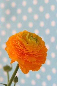 ranunculus & #polka #dots by Craft & Creativity : #lovewearyoulive