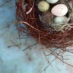 DIY birds nest tutorial from Kate's Creative Space - home decor for spring & Easter.