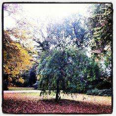 Julianapark Utrecht in de Herfst