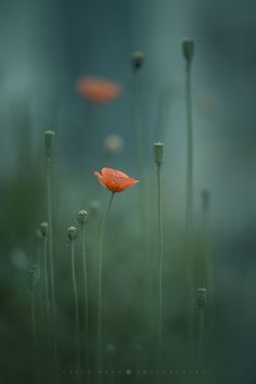 Yukie Wago Photography