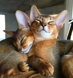 Exceptional Cat pics information are readily available on our internet site. Animals And Pets, Baby Animals, Funny Animals, Cute Animals, Pretty Cats, Beautiful Cats, Animals Beautiful, Cool Cats, I Love Cats