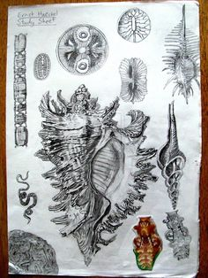 Sketchbook Drawing Ernst Haeckel Study by magiccoupons … - Natural Forms Gcse, Natural Form Art, Ernst Haeckel, Gcse Art Sketchbook, Sketchbooks, Shell Drawing, Observational Drawing, Texture Drawing, A Level Art