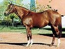 Blushing Groom: Son Of Red God; Grandson Of Nasrullah(Speed Demons); But More Important Is Female Family Which Is 3x5 To Blandford And St. Simon In Fourth Family (True Stamina Horses). Blandford is Also Sire Of Nasrullah's Broodmare Sire(Blenheim II):