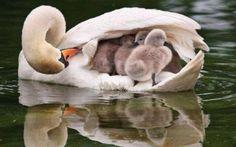 Wonderful Photos! : I Love Beautiful Amazing Animal Stories