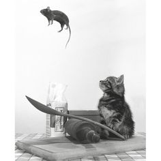 Cuty, cute, cat, kitten, rat, jump, mouse, dinner, spoon, fantasy, black and white, adorable, nuttet, nuser, kat, killing, fantasy, imagination, photograph, photo b/w.