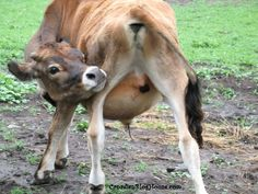 I LOOK MOOVALOUS!  #cow #farm #beef Funny Photos, Cow, Beef, Horses, Animals, Fanny Pics, Meat, Animales, Animaux
